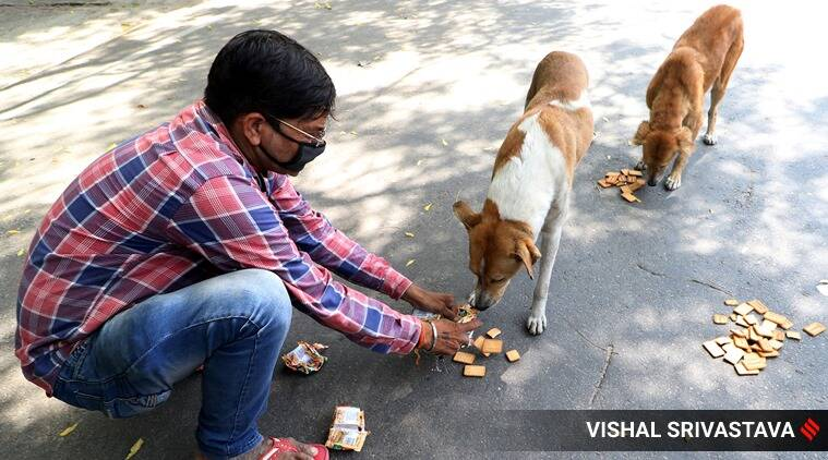 Stray dogs go hungry without scraps of leftover hotel food, PMC urges animal activists to help