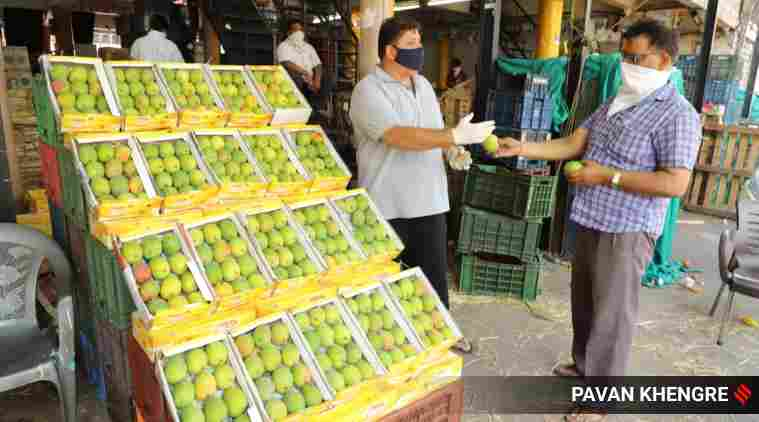 Ratnagiri Hapus floods markets, prices collapse as retail buyers stay away