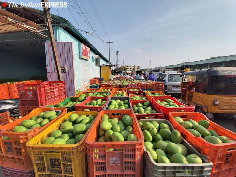 In Hyderabad, indicators that this year might be a sour story for mango lovers and sellers