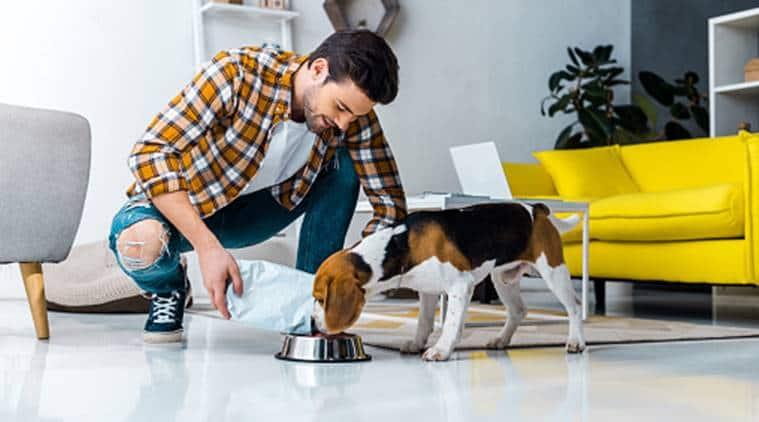 national pet day, pet animals, coronavirus
