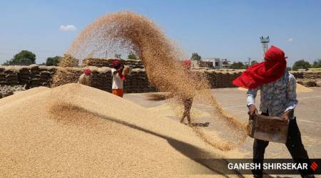 Wheat procurement: Around Rs 11,000 crore yet to be paid to farmers