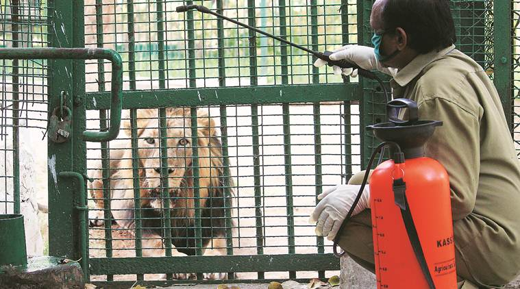 Coronavirus: Zoos, sanctuaries on high alert after tiger tests positive in New York zoo