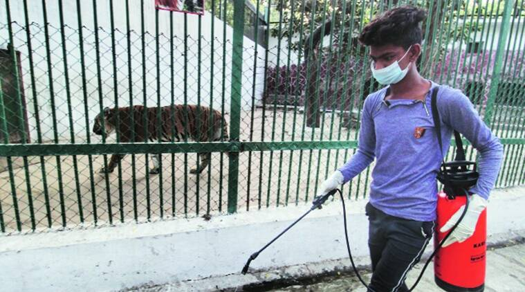 COVID-19: Staff screened; enclosures sanitised at Pune zoo