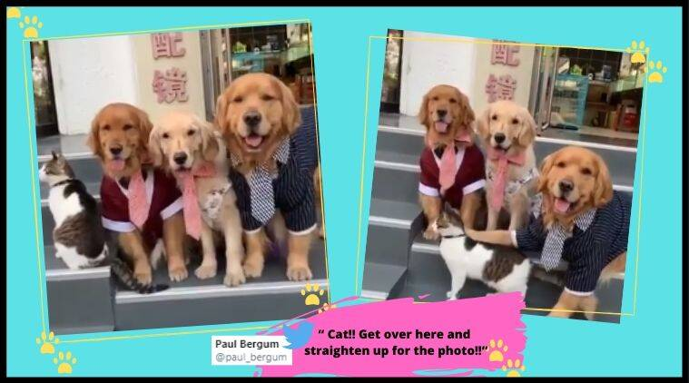 Cat and dogs, Cat and dogs video, Dog videos, cat and Dog family picture, Cat and Dog portrait, Trending news, Indian Express news