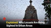 Explained: Why Locusts Are Being Sighted In Urban Areas