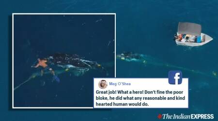 baby whale rescue queensland, man rescues baby whale shark nets, gold coast whalf calf rescue, man fined whale calf rescue, viral news, indian express