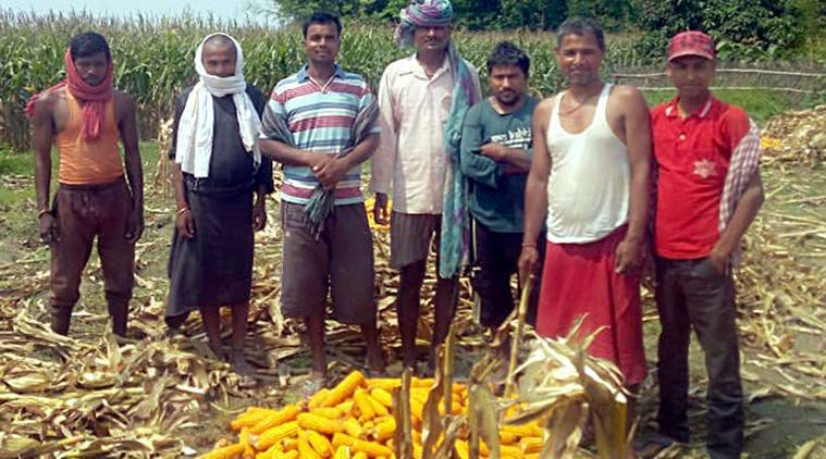 migrant labourers, migrant movement, farm labourers, paddy crop, indian agriculture, agriculture, punjab agriculture, india coronavirus lockdown