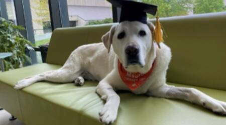 Dog, honorary doctorate, dog doctorate, Therapy dog doctorate, Trending news, Indian Express news