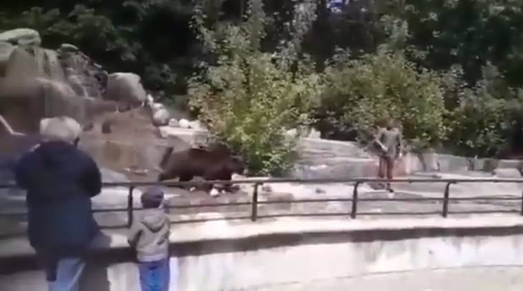 bear, Warsaw zoo, man bear fight viral video, man attacks bear viral video, lockdown, covid-19, ooronavirus,