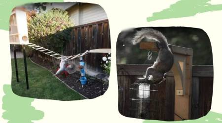 Perfect Squirrel Proof Bird Feeder, NASA, NASA Engineer's Obstacle Course, nasa engineering viral video, trending, indian express, indian express news