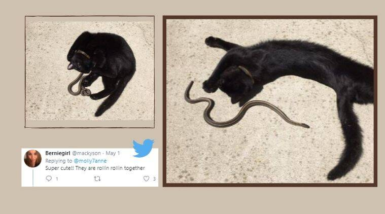 Cat and snake friendship, cat and snake pictures, unusually friendship, Trending news, Indian Express news