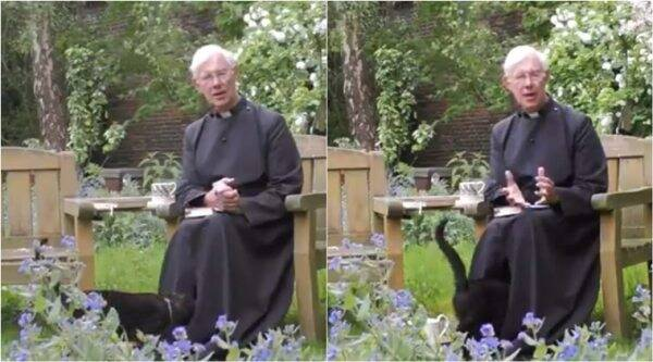 Canterbury Cathedral, cat interrupts priest sermon, cat photobomb priest sermon livestreaming, cat walks into priest cassock, funny cat videos, viral news, indian express