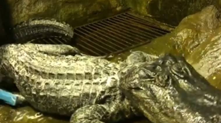 Alligator who survived WW2 Berlin bombing dies in Moscow zoo