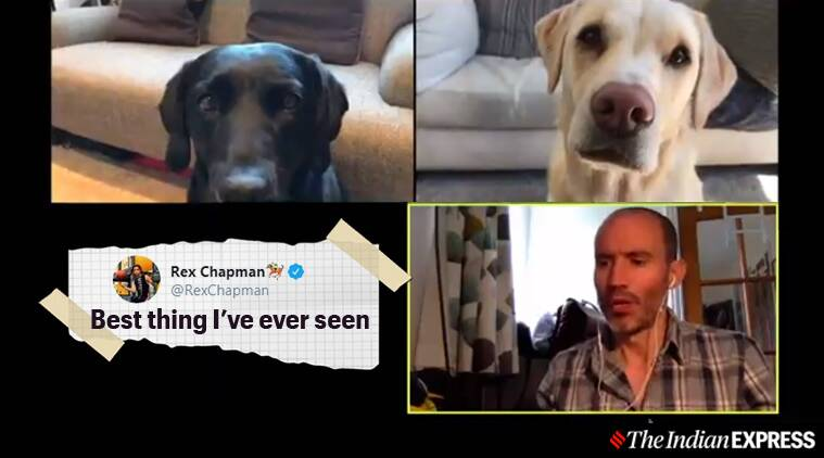 Watch Man Conducts Zoom Call With Pet Dogs Over Their Performance And Netizens Love It Trending News The Indian Express