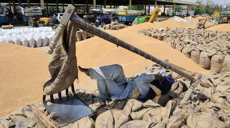 Govt begins procurement of chana amid shortage of jute bags, labour