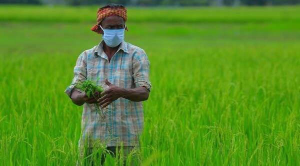 Covid-19 Agriculture India, India farming sector covid-19, farmers covid-19, coronavirus farmers india, india farming sector gdp, indian express