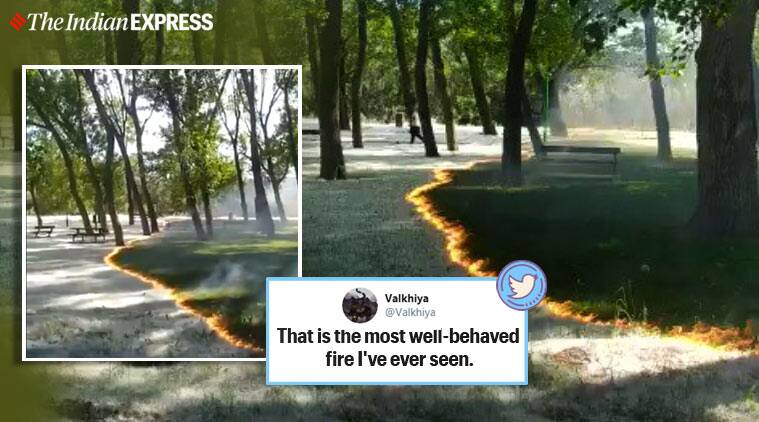 pollen fire, pollen fire viral video, controlled burning, Spain, park of Cidacos, fire viral video, fire trending