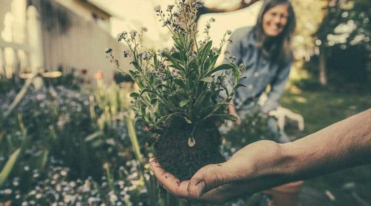 gardening, gardening skills, what makes a good gardener, poll, gardening poll, bollywood celebrities gardening, indian express, indian express news