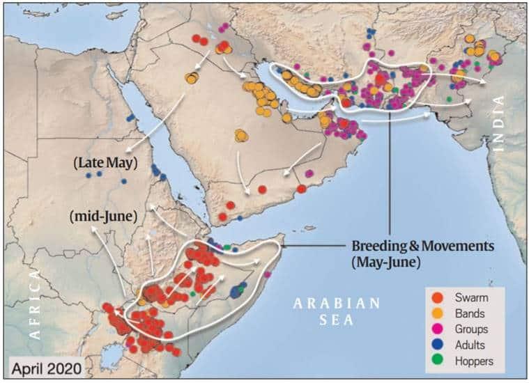 locusts attacks in India, pakistan