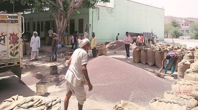 Rajsthan farmers, Rajasthan government Krishak Kalyan fees, Krishak Kalyan fees, Rajasthan Krishak Kalyan feem cess on agricultural produce, Indian express, coronavirus, covid 19, rajasthan coronavirus update,