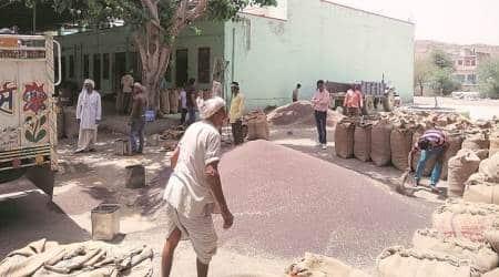 Rajsthan farmers, Rajasthan government Krishak Kalyan fees, Krishak Kalyan fees, Rajasthan Krishak Kalyan feem cess on agricultural produce, Indian express, coronavirus, covid 19, rajasthan coronavirus update,