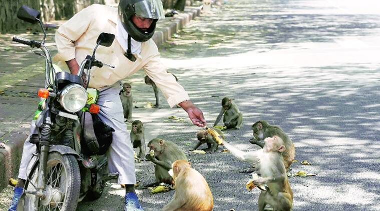 animals in quarantine ranjit lal sunday eye indian express news animals in lockdown dogs on street lockdown quarantine