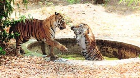 coronavirus, covid 19, india lockdown, Sayajibaug zoo, Sayajibaug zoo animals, vadodra zoo, indian express news