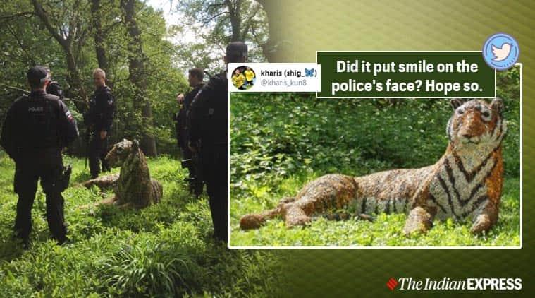 Tiger, Tiger sculpture, life-size tiger sculpture in UK, Kent, Trending news, Indian Express news
