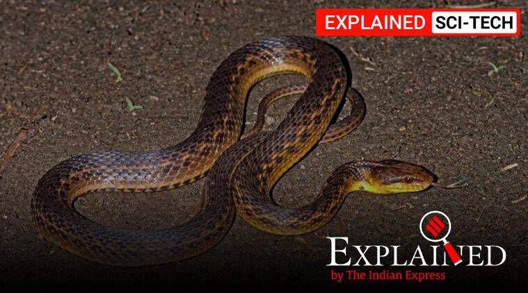 Explained: The Assam snake that was lost and subsequently found 129 years later