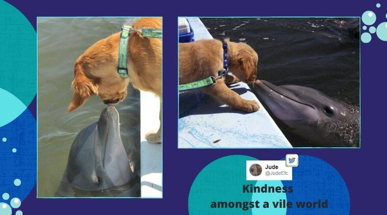 Dolphin and Dog, Dolphin and Dog friendship, Dog, Dog friendship, Unusual friendship, Trending news, Indian Express news