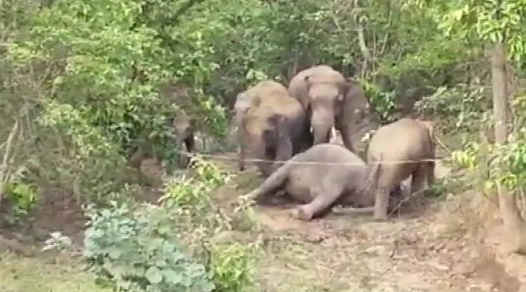 Chhattisgrah elephant death, Pregnant elephant dead, Chhattisgrah news, Indian express