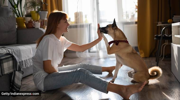 Untrained dogs can also help humans in distress: Study