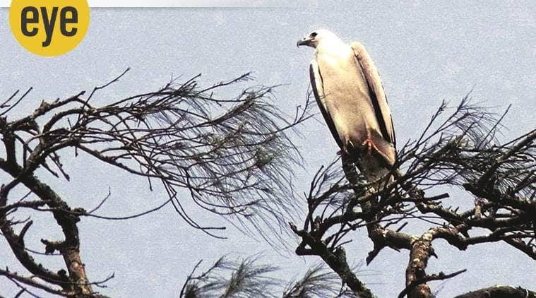 sea eagle, eye 2020, sunday eye, indian express news