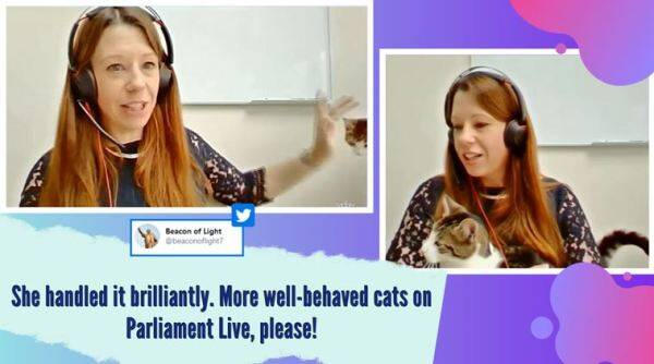 cat interrupts zoom call, house of lords, cat in lords committee meeting, pets in zoom call, covid 19 virtual calls, work from home zoom call, funny news, viral videos, indian express