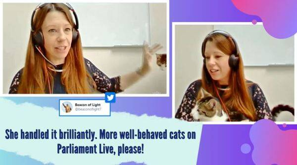 cat interrupts zoom call, house of lords,