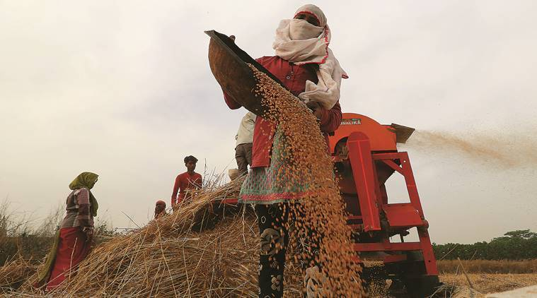 Procured 305 lakh quintals of wheat, paid Rs 3,890 crore: UP Government