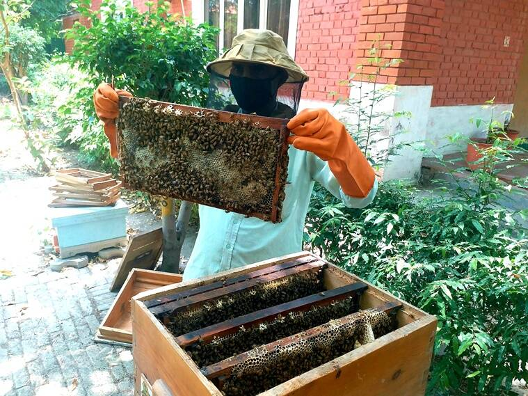honey bees, honey production, environment sustainability, sustainable living, indianexpress.com, indianexpress, pollution,