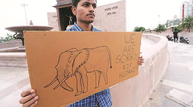 Kerala combs forests to probe elephant's death, Opposition leaders ...