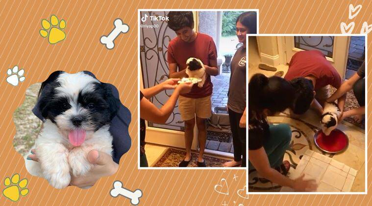 Viral video: New puppy welcomed in Indian home like a bride is melting hearts online