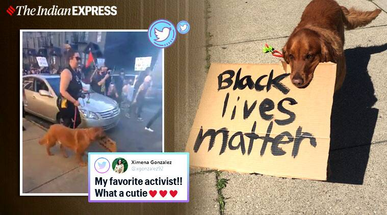 george floyd, US anti racism protest, protest dog, dog george floyd protest, dog black lives matter march, pets in US anti racism rallies, viral news, indian express