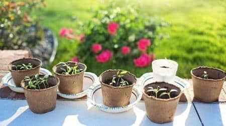 mircogreens, benefits of mustard micro greens, mustard, fenugreek micro greens, mustard sprouts how to grow at home, indian express