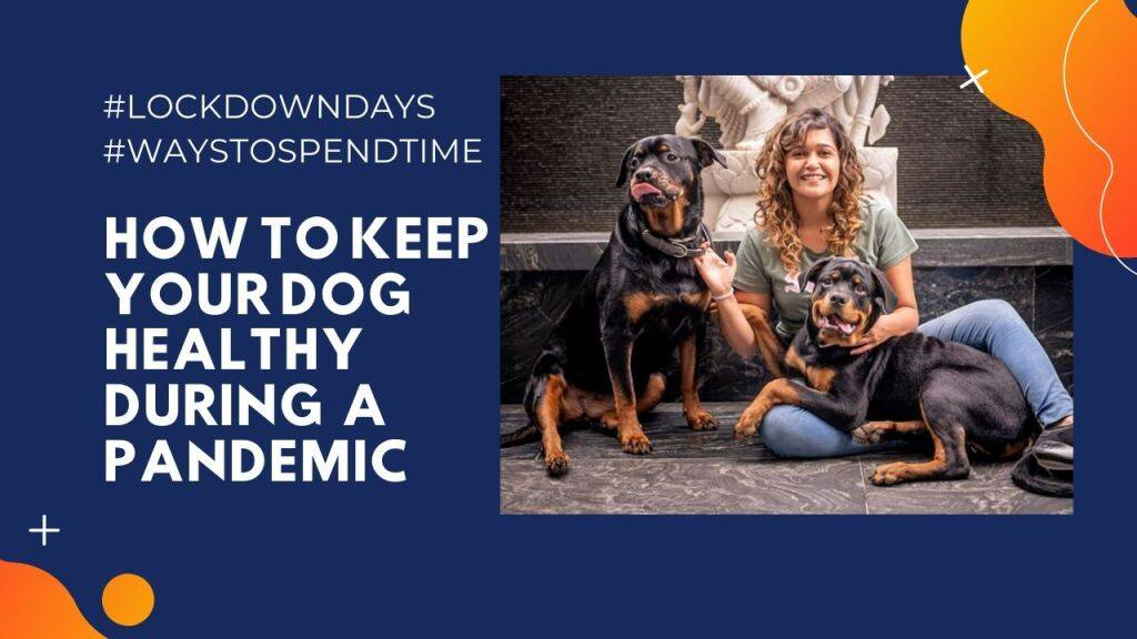 How to take care of your dog during pandemic | Pet Care Tips