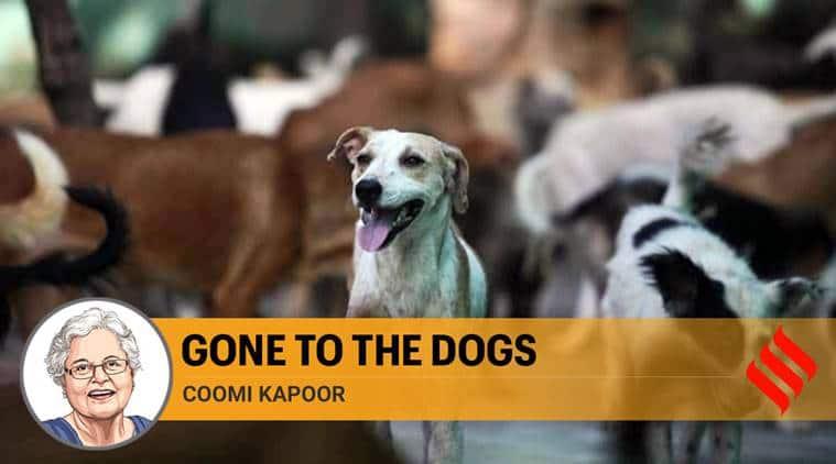 stray dog menace in india, stray dogs india, stray dogs animal activists, stray dogs vaccination, maneka gandhi animal activist, coomi kapoor column today, india coronavirus, india lockdown