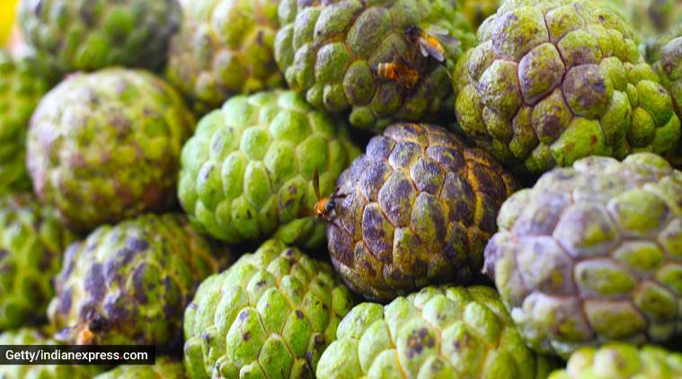 custard apples, health benefits of custard apples, healthy eating, health and immunity, indian express, indian express news