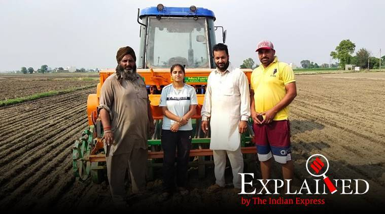 Direct Seeding Rice technique, Punjab paddy sowing, Punjab DSR method explained, DSR method rodent attack, Indian Express