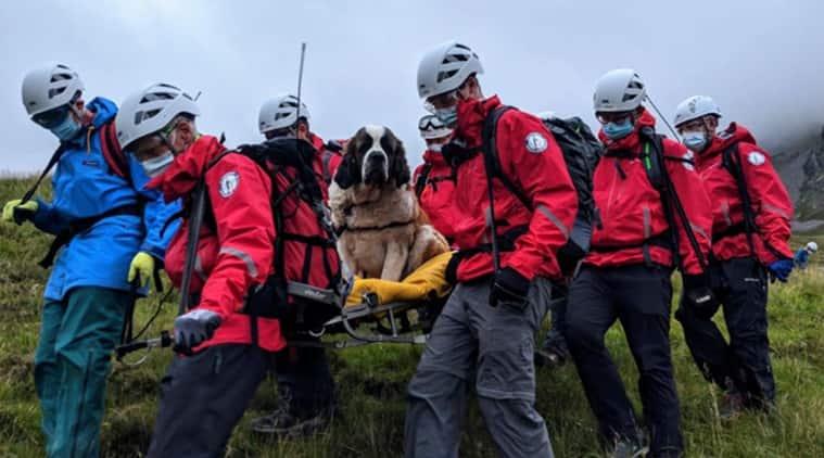 St Bernard dog, England, St Bernard dog rescue, Dog rescue video, dog collapse, dog videos, Trending news, viral video, Indian Express news
