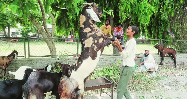 Eid-al-Adha: Sale of goats down by 80%, supply and demand chain disrupted