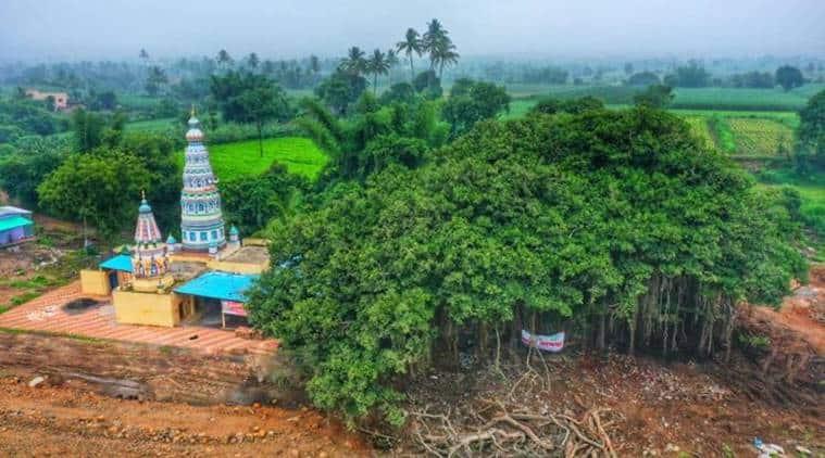 aditya thackeray, sangli highway plan, sangli highway banyan tree, sangli 400 year old banyan tree, villagers save 400 year old banyan tree, indian express news