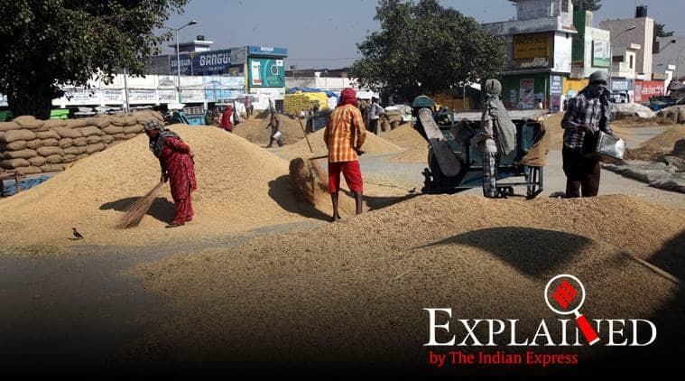 basmati, basmati rice, Geographical Indication tag, Geographical Indication tag for basmati, madhya pradesh basmati, indian express