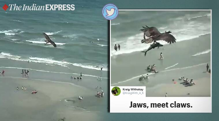 Bird, Osprey, Shark, Shark video, Viral video, South Carolina, Myrtle Beach, Trending news, Indian Express news